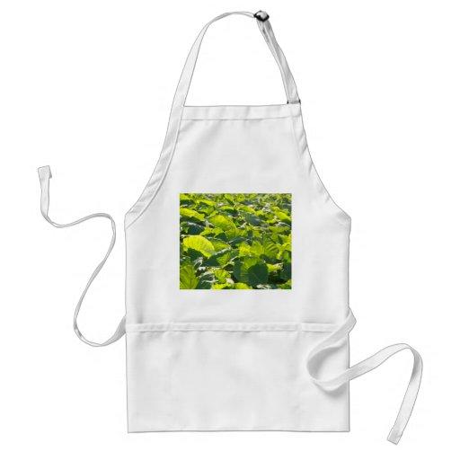 Taro plantation apron