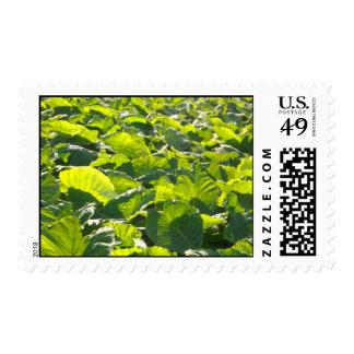 Taro plantation postage stamp