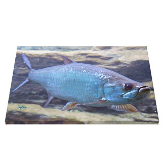 Tarpon Fish Canvas Print