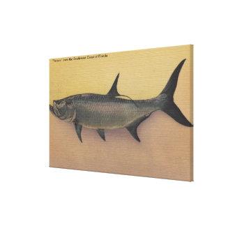Tarpon Fish from SW Coast of FloridaFlorida Canvas Print
