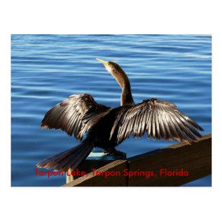 Tarpon Lake, Tarpon Springs, Florida Postcard