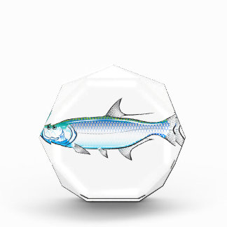 Tarpon Ocean Gamefish illustration vector Award