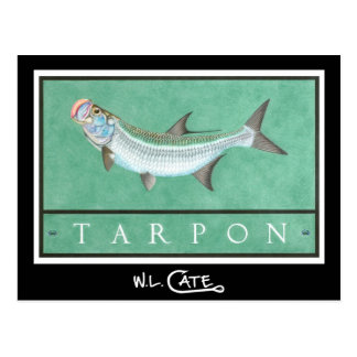 Tarpon Postcards