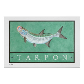 Tarpon Posters, Prints and Frames