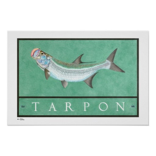 Tarpon Posters, Prints and Frames Poster