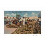Tarpon Springs, FL - Scene of Sponge Exchange Postcard