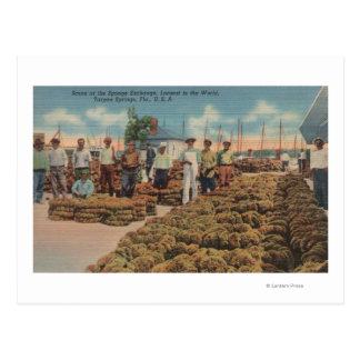 Tarpon Springs, FL - Scene of Sponge Exchange Postcards