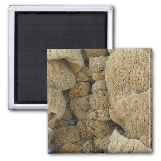 Tarpon Springs Sponges (2) Magnet