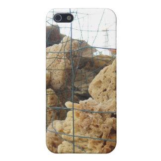 Tarpon Springs Sponges iPhone Case