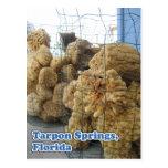 Tarpon Springs Sponges Postcard