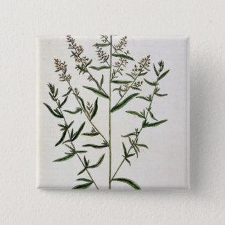 Tarragon, plate 116 from 'A Curious Herbal', publi Button