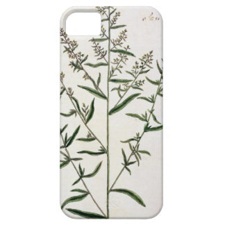 Tarragon, plate 116 from 'A Curious Herbal', publi iPhone SE/5/5s Case