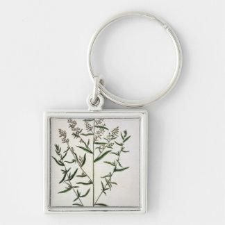 Tarragon, plate 116 from 'A Curious Herbal', publi Key Chain