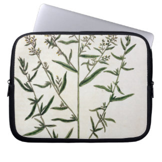 Tarragon, plate 116 from 'A Curious Herbal', publi Laptop Sleeve