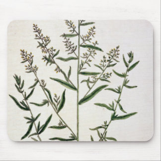 Tarragon, plate 116 from 'A Curious Herbal', publi Mouse Pad