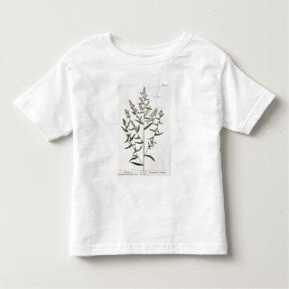Tarragon, plate 116 from 'A Curious Herbal', publi Shirt