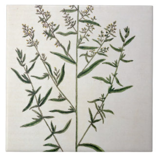 Tarragon, plate 116 from 'A Curious Herbal', publi Large Square Tile