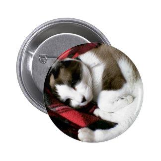 tartan kitty snoozing away pinback button