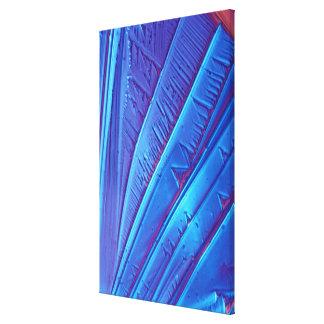 Tartaric acid crystals canvas print
