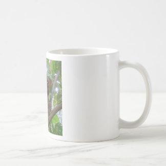 Tarzier Tazas De Café