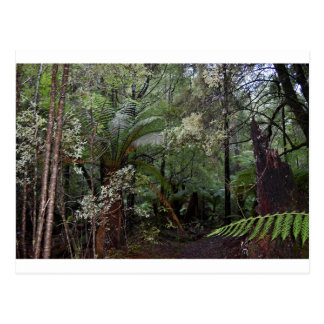 TASMANIA LANDSCAPE TARKINE NATIONAL PARK POSTCARD