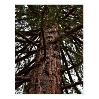 TASMANIA LARGE TREE WILDERNESS POSTCARD