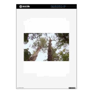 Tasmania Old trees reach for the sky Decal For iPad 2