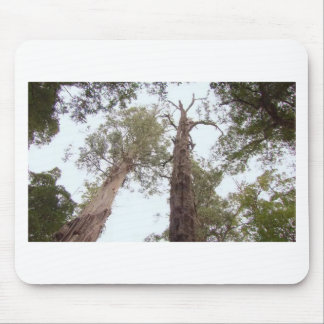 Tasmania Old trees reach for the sky Mouse Pad