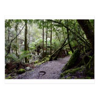 TASMANIA TREES MT FIELD NATIONAL PARK POSTCARD