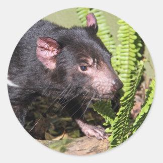 Tasmanian Devil, Australia Classic Round Sticker