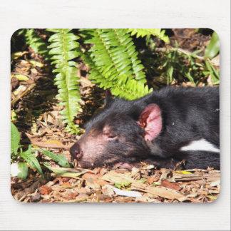 Tasmanian Devil Basking in the Sunlight Mouse Pad