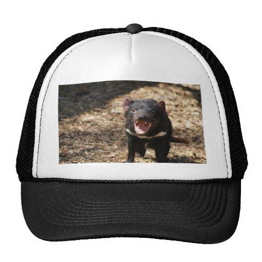 Tasmanian Devil Hats