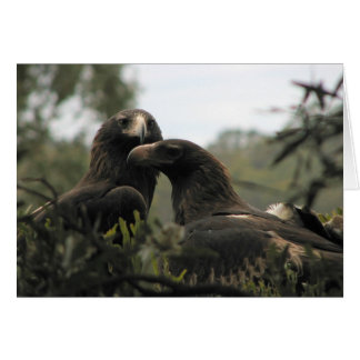 Tasmanian Wedge Tailed Eagles Card