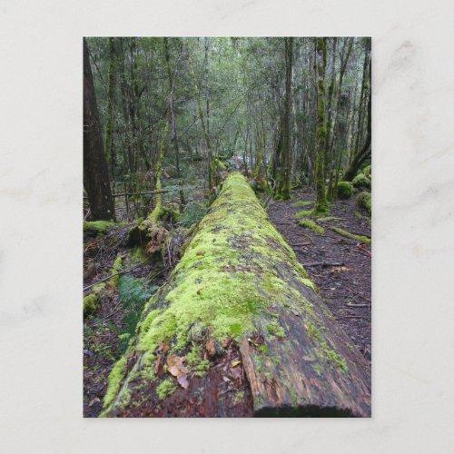 Tassie Tree postcard