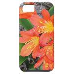 Tasteful Orange Flowers iPhone 5 Cover