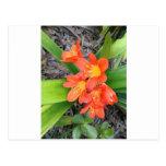 Tasteful Orange Flowers Post Card