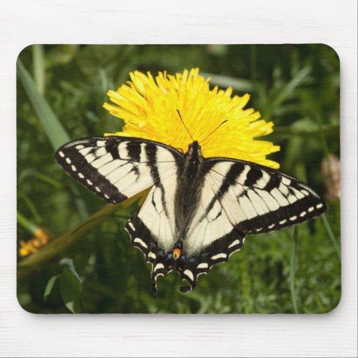 Tattered Swallowtail Mousepad
