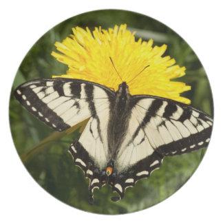 Tattered Swallowtail Plate