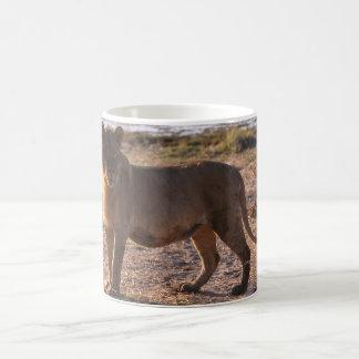 Tau, Lion, Photo Classic White Coffee Mug