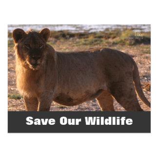 Tau Save Our Wildlife Postcard