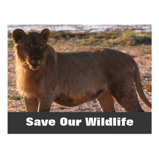 Tau Save Our Wildlife Postcard  Zazzle