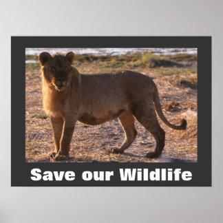 Save Wildlife Posters, Save Wildlife Prints, Art Prints ...