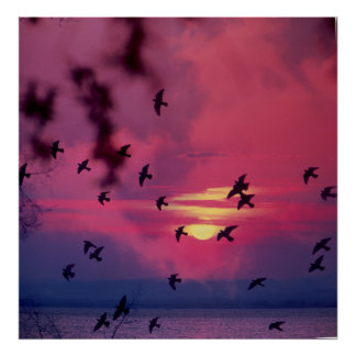 Tauben im Flug bei Sonnenuntergang am See Plakatdrucke