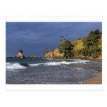 Tauranga Bay Pohutukawa trees coast New Zealand Post Card