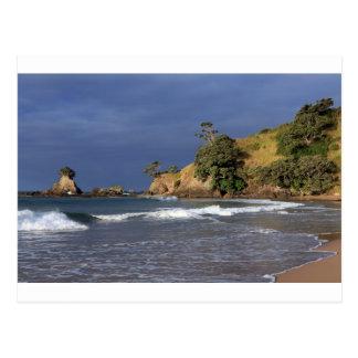 Tauranga Bay Pohutukawa trees coast New Zealand Postcard