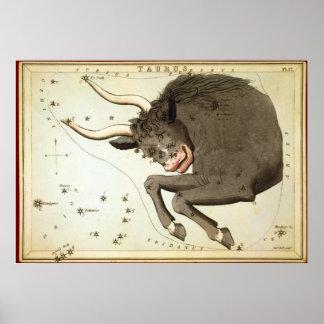 Taurus Posters