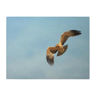 Tawny Eagle (Aquila Rapax) In Flight, Kgalagadi Wood Wall Art