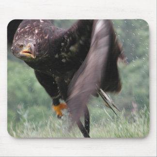 Tawny Eagle Mouse Pad