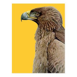 Tawny Eagle Postcard