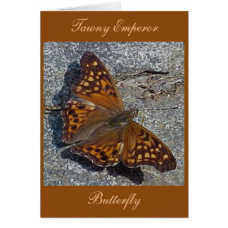 Tawny Emperor Butterfly Note Card